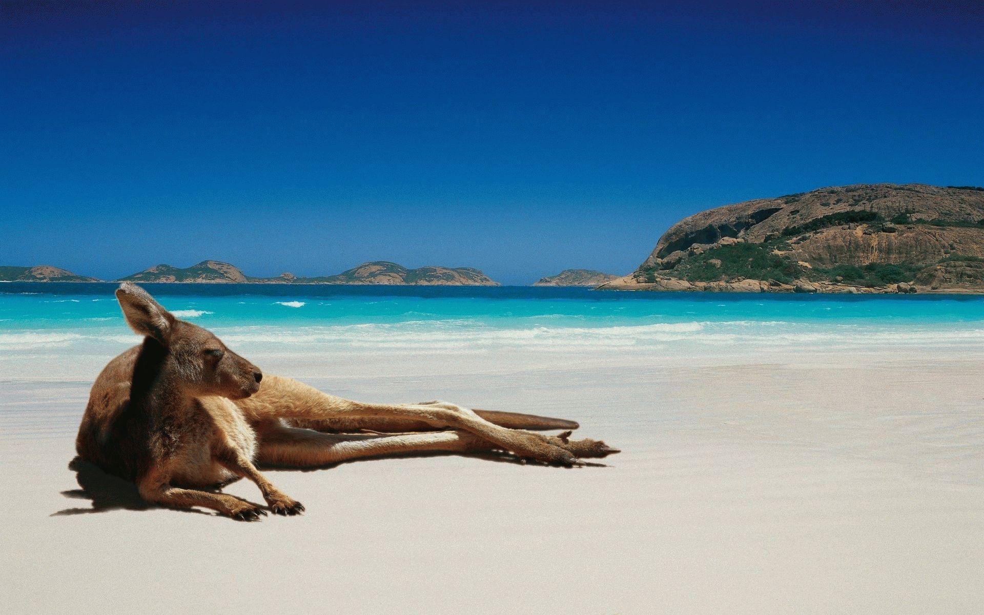 Про австралию с картинками