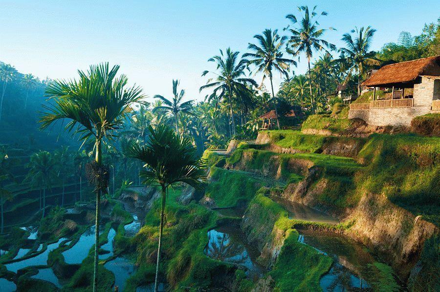 Отдых в Убуде в 2021, Индонезия - цены, развлечения и достопримечательности
