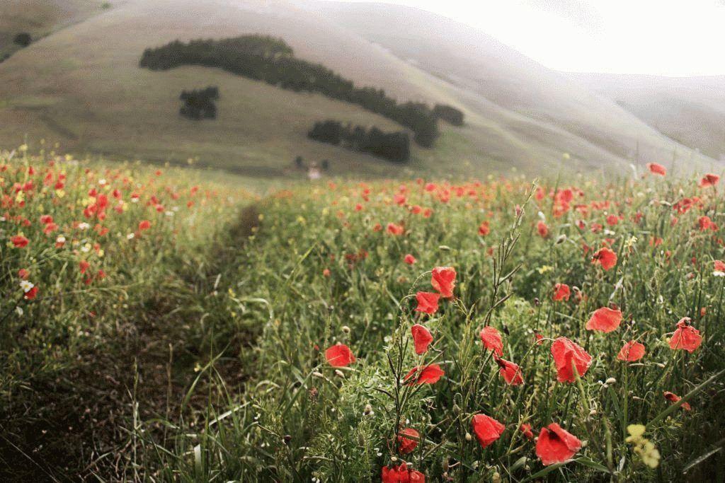 Отдых в Италии зимой, куда лучше отправиться и что посмотреть