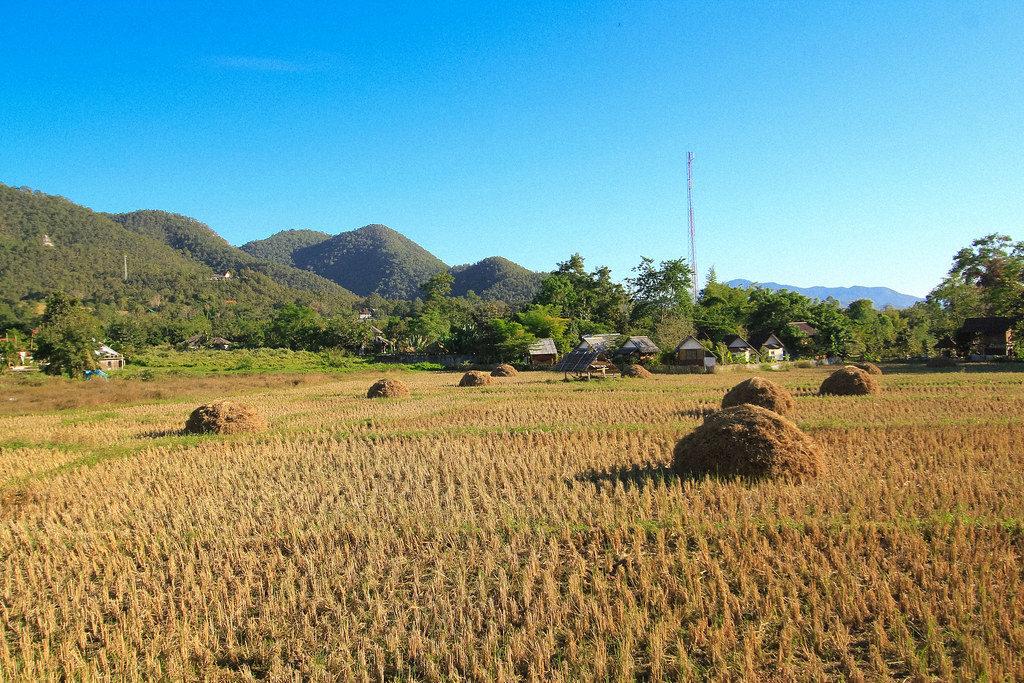 Рисовые поля вокруг города